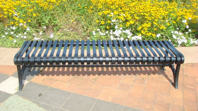 A Bench with Black-eyed Susans