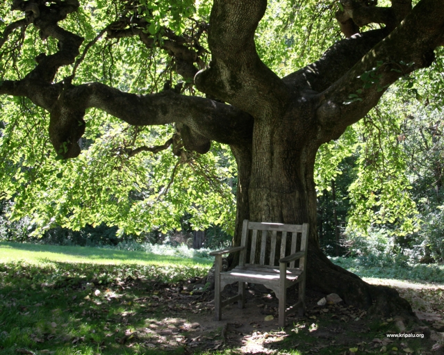 Meditative Bench Think Great Thoughts Here