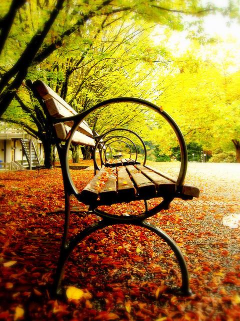 Park benches have the best kept secrets.