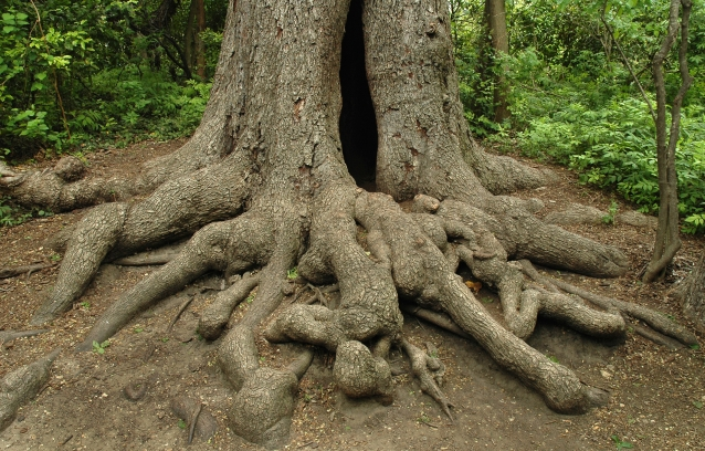 Gnarly Roots